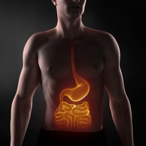 Pathogenic gut bacteria and IBD