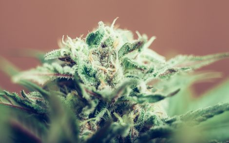 Cannabinoid Combo Therapy Ended Teen's Bowel Disease Symptoms, Study Reports