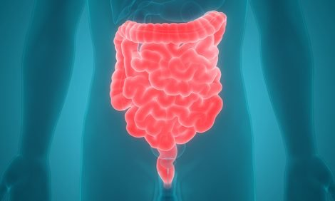 Fungi and Bacteria Could Be Targeted Together to Treat IBD, Study Suggests